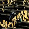 Amerikansk hårdttræ kommer til Danmark