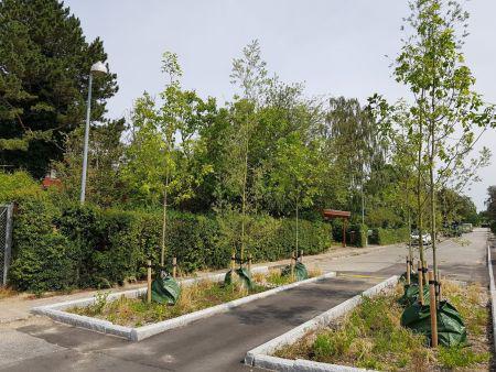 Regnbede med pimpsten gør regnvand til et bæredygtigt aktiv
