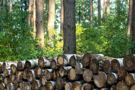 Ny podcast giver viden om træ i byggeriet